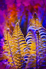 yellow fern (Oxygen) Tags: life new pink summer plant abstract fern color macro nature beautiful beauty grass yellow forest garden spiral botanical leaf spring stem bush flora purple natural bright bokeh vibrant background nobody fresh frond foliage growth mysterious lush botany freshness resources helios422
