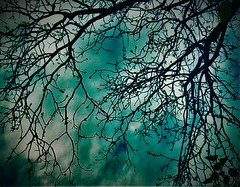 (Photosintheattic) Tags: abstract color tree texture water clouds outdoor branches blues serene limbs tangle blooming budds pecantree