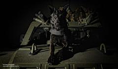It's a Dogs Life! (Defence Images) Tags: uk dog animal military free police canine wheeled vehicle british panther defense defence raf royalairforce commandvehicle mwd airdog northolt doghandler rafp militaryworkingdog combatvehicles protectedpatrolvehicles servicepolicedog