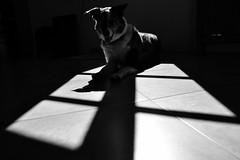 Galaad (Emma Plume) Tags: chien animal nikon noiretblanc fascination gomtrie hombre fenetre obscur formes parallles d3100