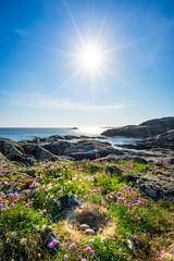 welcome to the world (Richard Larssen) Tags: sea sun nature norway photography coast norge seagull sony horizon norwegen visit richard eggs scandinavia islet hordaland bmlo sunstar sunnhordland a7ii bomlo visitnorway larssen richardlarssen sel1635z