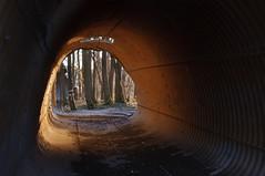 Pertugio (albi_tai) Tags: alberi ticino nikon colore tunnel tubo luce d90 2013 panperduto pertugio nikond90 albitai