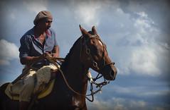 El sauceo (Eduardo Amorim) Tags: horses horse southamerica argentina caballo cheval caballos sauce cavalos corrientes pferde cavalli cavallo cavalo gauchos pferd chevaux gaucho amricadosul gacho amriquedusud  gachos  sudamrica suramrica amricadelsur sdamerika  americadelsud americameridionale eduardoamorim provinciadecorrientes corrientesprovince cavall