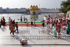 India - Punjab - Amritsar - Golden Temple - 318 (asienman) Tags: india sikh punjab amritsar gurudwara goldentemple harmandirsahib asienmanphotography