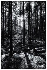 Woods for the Trees (miroto2014) Tags: trees forest scotland woods glencoe scottishhighlands glencoelochan scottishforest