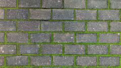 Mossy mortar (David E Finol) Tags: musgo moss pattern bricks repetition ladrillos rhythm ritmo repeticin patrn davidfinol motorolag3
