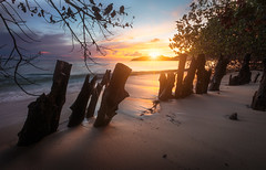 Port Glaud, Seychelles (jonathan le borgne) Tags: wood blue trees light sunset sea sky orange sun tree green beach nature water colors yellow night canon golden sand waves bright seychelles canon6d portglaud canon1635f28liiusm