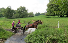 Chester Horse Driving Trials Erddig 11 IMG_7154 (rowchester) Tags: horse water driving carriage chester trials erddig