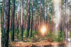 Magic of Life (AirSonka) Tags: zorki trees film fairytale analog forest 35mm magic lightleak arbres analogue wald bume fort pelcula filmphotography pellicule zorki1 agfavista200 airsonka soniakaniss