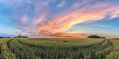 Heaven on Fire (m.cjo Fotografie - Martin Rakelmann) Tags: sunset panorama field sonnenuntergang pano feld rgen middelhagen