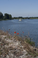view from the pier (Wendy:) Tags: pier mantova poppies mantua lombardy lagoinferiore