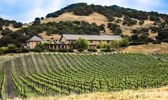 From Pixabay, Public Domain (creativebta) Tags: outdoors vineyard nap wine winery grapes napa