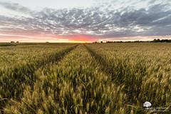 Un soir en Beauce (photosenvrac) Tags: paysage beauce culture ciel nuage thierryduchamp sigma8mm