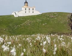 Stoer Head (steverh) Tags: lighthouse stoer cottongrass
