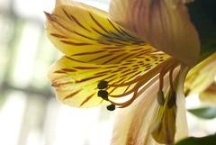 Orange. (maria_logak) Tags: orange flower macro nikon dof depthoffield macrolens