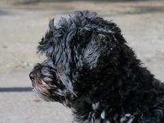 Perfil_02 (jagar41_ Juan Antonio) Tags: animal perro perros animales mascota mascotas
