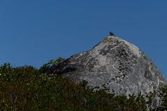 _DSC8641.jpg (newminaswilders) Tags: ca canada nature birds rocks novascotia wildlife portjoli