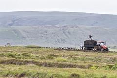 Taking home the turf (Frank Fullard) Tags: tractor heritage rural eu peat mayo tradition bog turf harvesting erris belmullet fullard peatharvesting bangorerris euregulations frankfullard