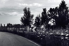 """""""The Curve"""" (giannipaoloziliani) Tags: road morning flowers trees sky blackandwhite italy nature alberi clouds concrete monocromo strada nuvole cloudy details horizon cement perspective earlymorning natura monochromatic campagna cielo fiori curve campaign ontheroad invasion biancoenero curva povalley valpadana streetdetails iphonephoto giannipaoloziliani"""