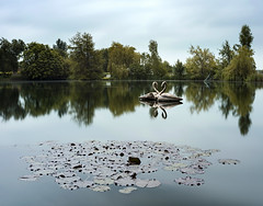 Swans (thecheekyscamp) Tags: longexposure trees sky reflection green water statue bronze clouds reflections swan le lillies waterlillies