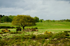 Sutton Park (Sarah Price Photography) Tags: uk england tree green landscape nikon suttonpark
