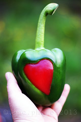healthy eating... (Gregoria Gregoriou Crowe) Tags: red green love nature vertical closeup contrast pepper outdoors photography day hand organic redheart foodanddrink freshness bellpepper loveheart healthyeating cultivated greenbackground beautyinnature humanhand colourimage sweetgreenpeppers