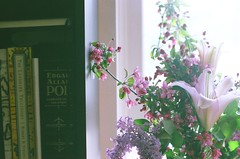 (Jeannette Rose) Tags: flowers film books bookshelf bouquet lilacs edgarallenpoe