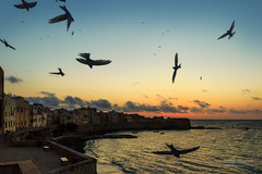 Le Rondini II (Anatole Klapouch) Tags: ocean sunset sea sky italy birds silhouette wall clouds fly flying ancient mediterranean italia flock flight sicily bastion fortress sicilia swallows trapani tyrrhenian