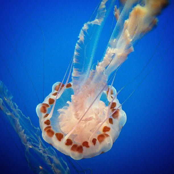 I love jellyfish