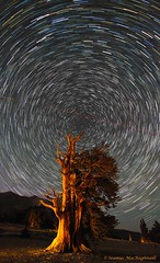 Ancient Bristlecone Star Trails-2 (HavCanon.WillTravel) Tags: nightphotography lightpainting startrails jettrails bristleconepine rainbowcolors canon5dmkii