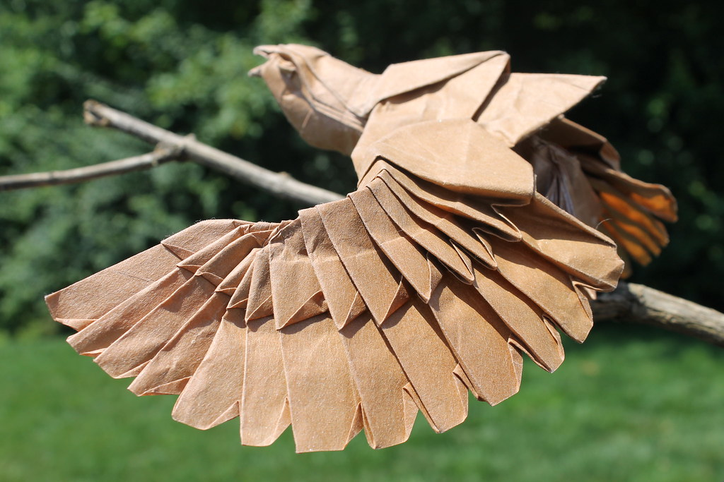 The Worlds Most Recently Posted Photos Of Eagle And Origami