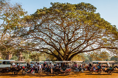Beating the Heat (GTR Photographic Images) Tags: landscape cambodia angkorwat rickshaw siemreap sigma1850mm nikond90 gtrphotograhicimages glenriley httpswwwfacebookcomgtrphotographicimages httphakomi29wixcomgtrphotoimages