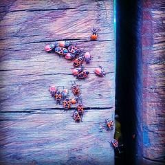 Bug Meeting