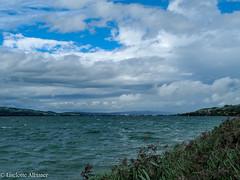 Sempachersee (albisserl) Tags: lake reed schweiz switzerland luzern che sempachersee sempach cantonlucerne