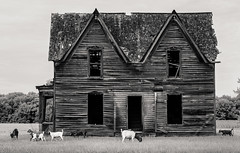 the Goateater House (Rodney Harvey) Tags: house abandoned rural lunch decay haunted spooky goats infrared hungry prey disappearence