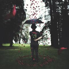 """November rain"" (Geoffrey D. Joe) Tags: roses canon rouge vert mm 50 fort magie dealerderves geoffreydevautour"