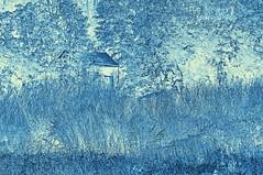 Field of Blue (brev99) Tags: blue monochrome cyan inversion tone tamron70300vc photoshopelements9 topazbweffects