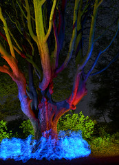 Tree experiment (Tywyll a Golau - Leo A Doran Photography) Tags: light lightpainting tree wales night painting lens wire long exposure flash cymru el aberystwyth ocf kit gels elwire noctography d5100