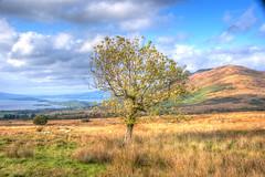 Sheep grazing under Conic Hill (u_sperling) Tags: geotagged scotland sheep hiking lochlomond trecking conichill geo:lat=560857252 geo:lon=4465319099999988