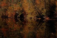 Reflections (gingerybamboo) Tags: autumn reflection fall nature water reflections d50 river nikon nikond50