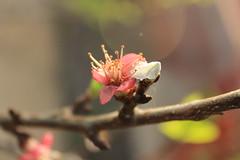 Luz II (Ay Fernanda) Tags: pink light naturaleza white flores flower blanco luz nature spring blossom magnolia ramas rosado magnolio flickrnature