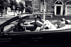 Dog day afternoon (Paul O' Connell) Tags: ireland dublin dog car photography drive day driver passenger opentop dogdayafternoon backseatdriver pauloconnell goingforadrive