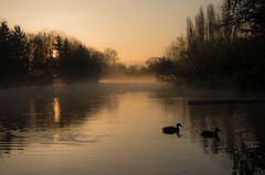 Morning Mist (NW Vagabond) Tags: morning mist sunrise river washington state ducks calm serene