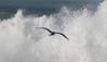 tempête à Quiberon (camaroem56) Tags: mer vent bretagne breizh armor vagues morbihan tempête
