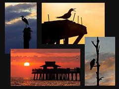Silhouettes of Florida (Rafe Abrook Photography) Tags: sunset red usa bird heron silhouette pier gulf florida swamp everglades naples tern osprey quartet naplespier