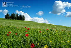 Spring time (1107lab.com) Tags: flowers blue trees sky italy green nature beautiful countryside spring europe loneliness none background country hill meadow simplicity tuscany poppies cypress quite cloudscape escapism