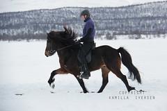 Ni fra Jakobsgrden (kamilla iversen) Tags: horse kamilla fra icelandic ni iversen jakobsgrden istlt istlt