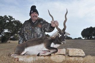 Trophy Blackbuck
