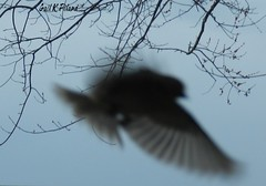 Spirit on the wing (gailpiland) Tags: light red david bird love photo wings spirit contemporaryart tribute remembrance tmi simplybeautiful theperfectphotographer spiritofphotography gailpiland ringexcellence artcityart magicmomentsinyourlifelevel1 rememberthatmomentl1