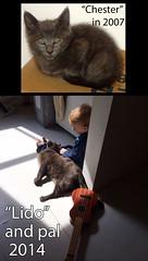 Lido and his best friend (Jimmy Legs) Tags: street cats chester update bushwick lido happytails